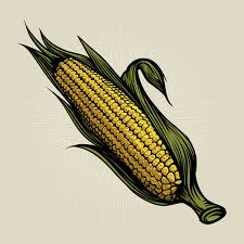 Corn, corn meal, corn flour, popcorn Organic