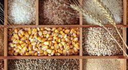 Whole Grains/wheat/etc